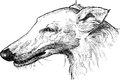 Portrait of a greyhound vector drawing the head the Royalty Free Stock Photography