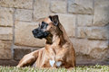 Portrait of a handsome dog outdoor mixed breed Royalty Free Stock Image