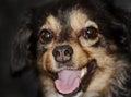 Portrait of happy dog Royalty Free Stock Photo