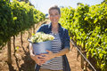 Portrait of happy vintner holding harvested grapes in bucket Royalty Free Stock Photo
