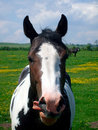 Portrait of Horse in countryside Royalty Free Stock Photo