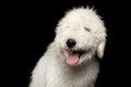 Portrait Of Komondor Dog