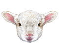 Portrait of Lamb.