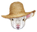 Portrait of Lamb with straw hat.