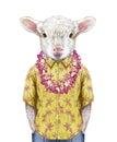 Portrait of Lamb in a summer shirt with Hawaiian Lei.