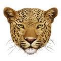 Portrait of Leopard.