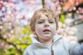Portrait of little boy with flowering tree on background magnolia Royalty Free Stock Photo