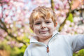 Portrait of little boy with flowering tree magnolia on background Royalty Free Stock Images