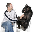 Portrait of mid adult man tickling chimpanzee Stock Photos