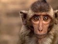 Portrait monkey the very cute mammal at thailand Royalty Free Stock Images