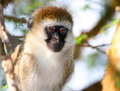 Portrait of monkey in the wild Stock Image