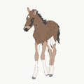 Portrait of a namib desert wild horse kitten Royalty Free Stock Photo
