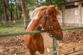 Portrait of nice brown horse Royalty Free Stock Photo