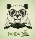 Portrait of Panda Bear with glasses Royalty Free Stock Photo