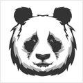 Portrait of Panda. Cute attractive face bears.