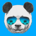 Portrait of panda with mirror sunglasses hand drawn vector isolated elements Stock Image