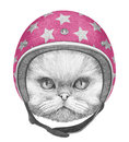 Portrait of Persian Cat with Helmet.