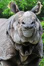 Portrait of a Rhino Stock Photography