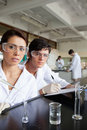 Portrait of science students working Royalty Free Stock Images