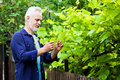 Portrait of senior man gardening a in his garden Royalty Free Stock Image