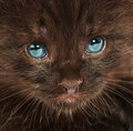 Portrait of a small kitten Stock Image