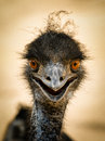Portrait of a smiling  ostrich Royalty Free Stock Photo