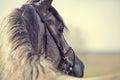 Portrait of a sports stallion Royalty Free Stock Photo