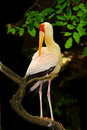 Portrait of stork bird Royalty Free Stock Photo
