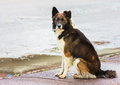 Portrait of a stray dog in street after rain Stock Images