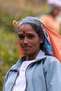 Portrait of Tamil woman while working in tea plantation Royalty Free Stock Photo