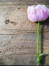Portrait texture wood and pink flower background feminine on rustic stem is green is brown photograph is oriented in Royalty Free Stock Photography