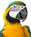 Portrait of tropical  wild parrot. Stock Photos