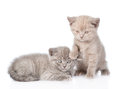 Portrait two cute kittens. isolated on white background Royalty Free Stock Photo