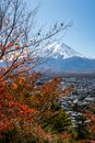 Portrait vertical view of Mount Fuji through colorful autumn leaves and dry tree branches, from Chureito Pagoda in Japan. Royalty Free Stock Photo