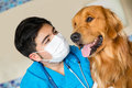 Portrait veterinarian checking beautiful dog Royalty Free Stock Images
