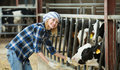 Portrait of veterinary technician feeding cows