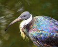 Portrait of waterfowl with long beak next to water in profile at local zoo Stock Photos
