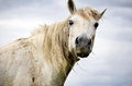 Portrait of white horse on a cloudy sky background Royalty Free Stock Photo