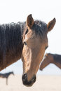 Portrait wild horse Royalty Free Stock Photo