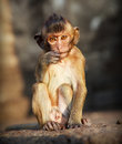 Portrait of young monkey Royalty Free Stock Photo