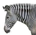 Portrait of zebra Royalty Free Stock Photo