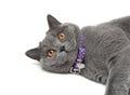 Portret van een kat met gele ogen op een witte achtergrond Stock Fotografie
