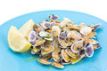 Portuguese traditional clams conquilhas Stock Photos