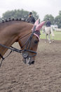 Nóbl kôň