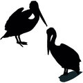 Posing pelican set of the black silhouettes Royalty Free Stock Photos