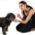 Positive reinforcement woman giving to her dog isolated on white background Stock Photography