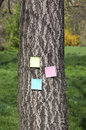 Post it on bark tree three trunk of a Royalty Free Stock Photos