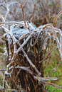 Post and bush encased in ice woodland branch from an storm Royalty Free Stock Image