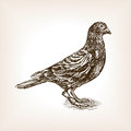 Post Pigeon Sketch Vector Illu...