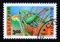 Postage stamp Bulgaria, 1992. Great Green Bush Cricket Tettigonia viridissima Royalty Free Stock Photo